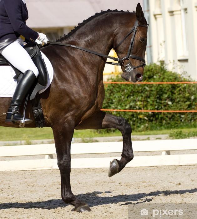 Mural de Parede em Vinil dressage horse - Desportos Individuais