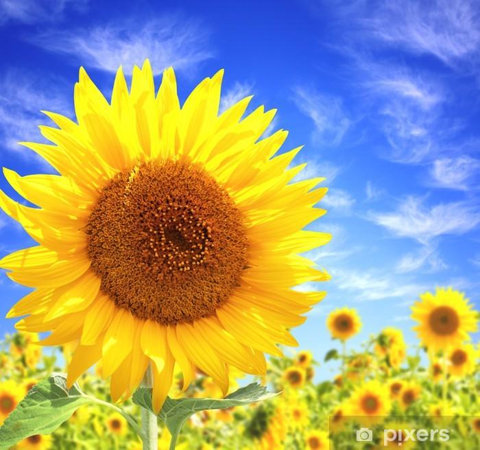 Adesivo Pixerstick Sunflowers - Temi