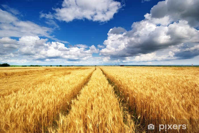 Meadow of wheat Pixerstick Sticker - Themes