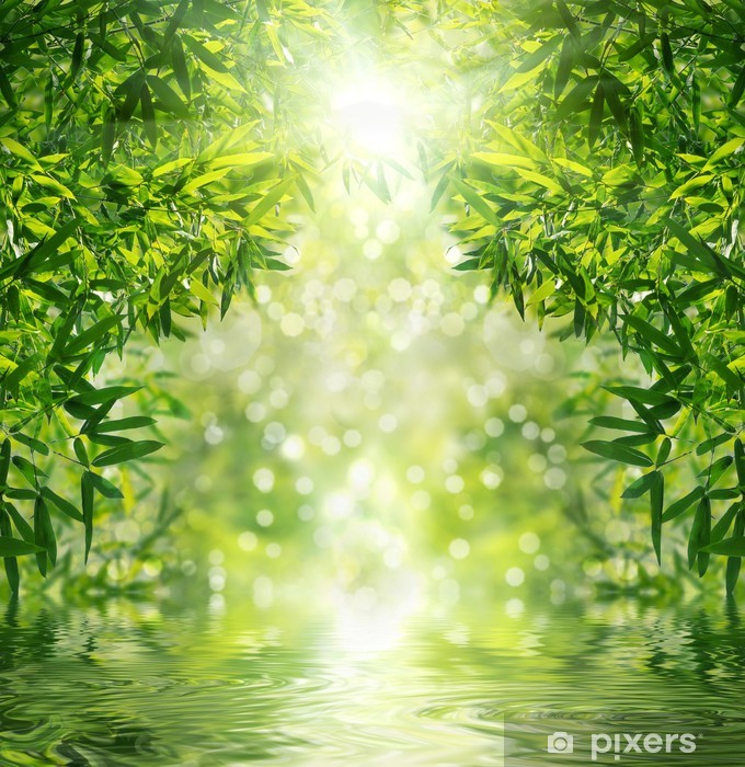 Fotomural Estándar Zen bosque de bambú, el sol y el agua. - Temas