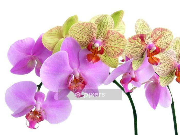 Sticker mural Deux jolies orchidées - Sticker mural