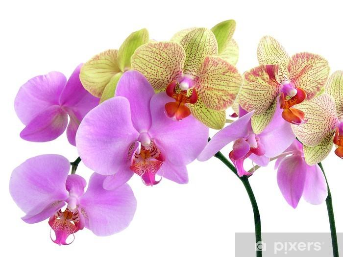 Adesivo Pixerstick Due orchidee belle - Adesivo da parete