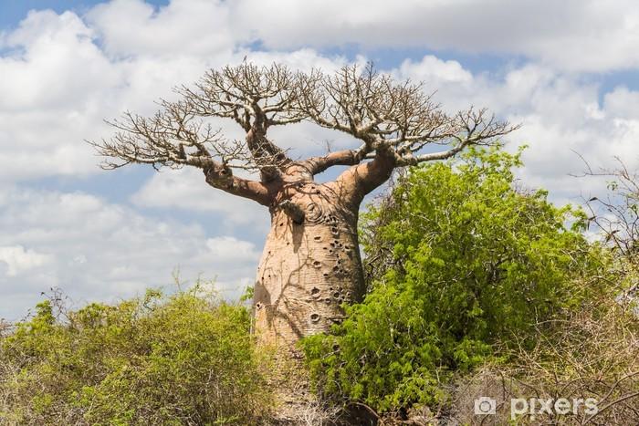 Nálepka Pixerstick Baobab tree a savana - Témata