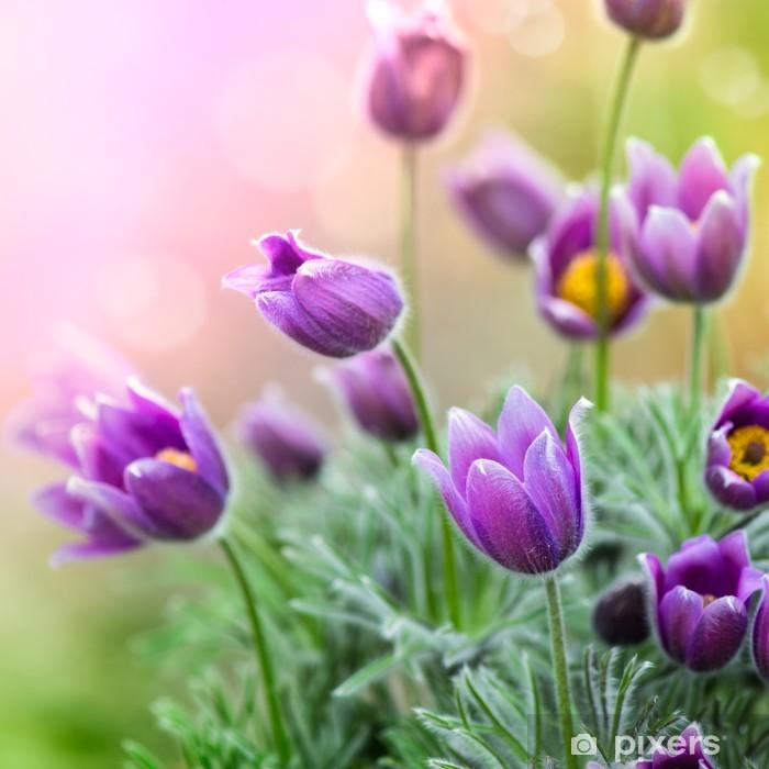 Plakat Purpurowe kwiaty wiosny - Tematy