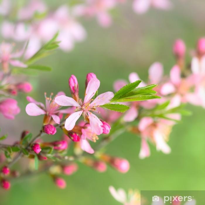 Plakat Kwiaty wiosenne - Pory roku