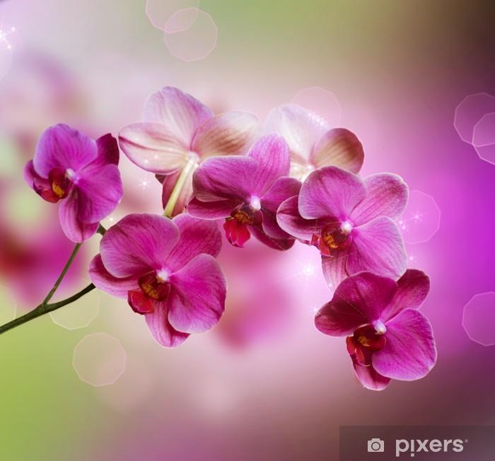 Plakat Orchidea -