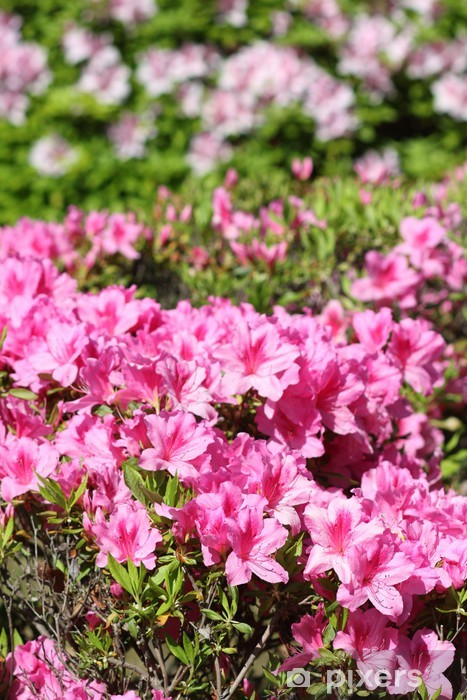 Nálepka Pixerstick Azalka - Květiny