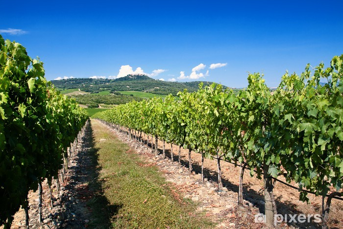Fototapeta winylowa Winnica Toskania - Tematy