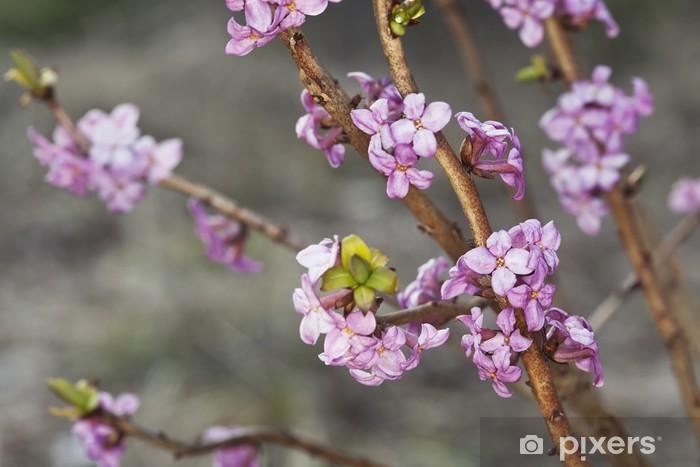 Nálepka Pixerstick Kvetoucí lýkovec jedovatý - Květiny