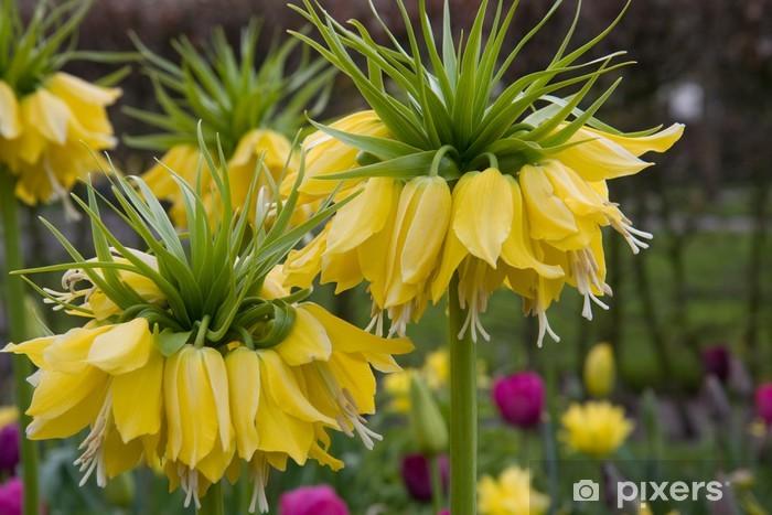 Sticker Pixerstick Fritillaria imperialis Lutea - Fleurs