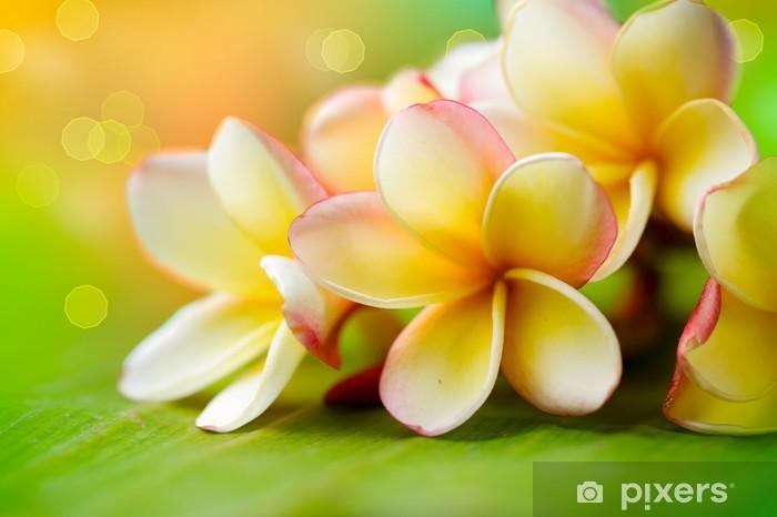 Frangipani Tropical Spa Flower. Plumeria. Shallow DOF Pixerstick Sticker - Destinations