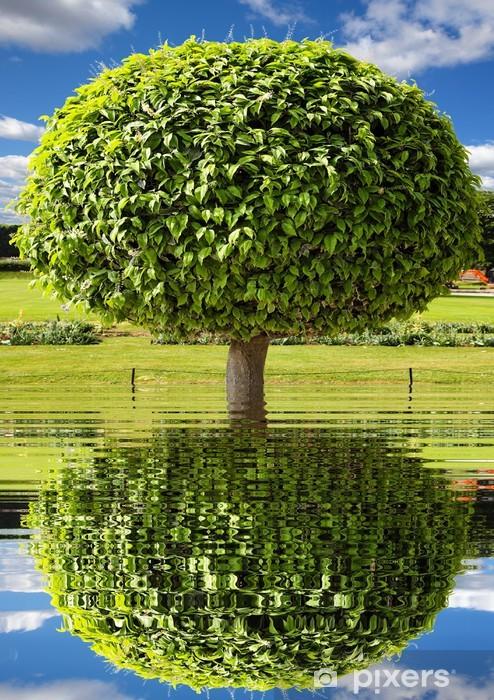 Naklejka Pixerstick Park drzewo - Drzewa