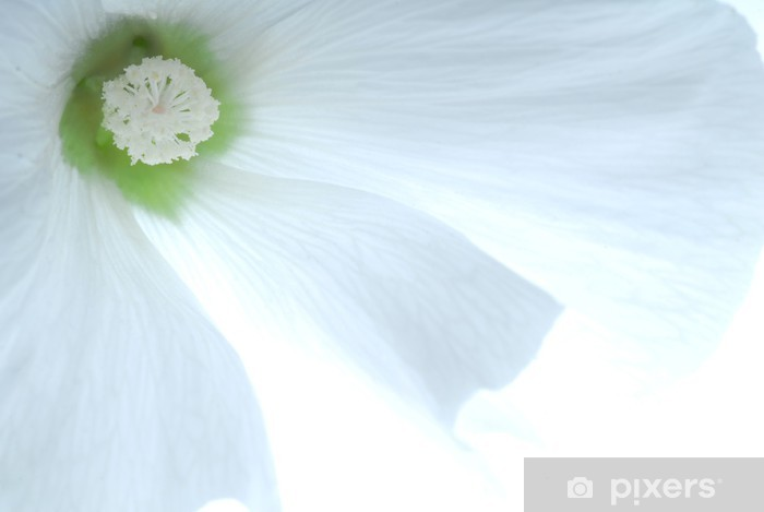 Pixerstick Aufkleber White flower - Blumen