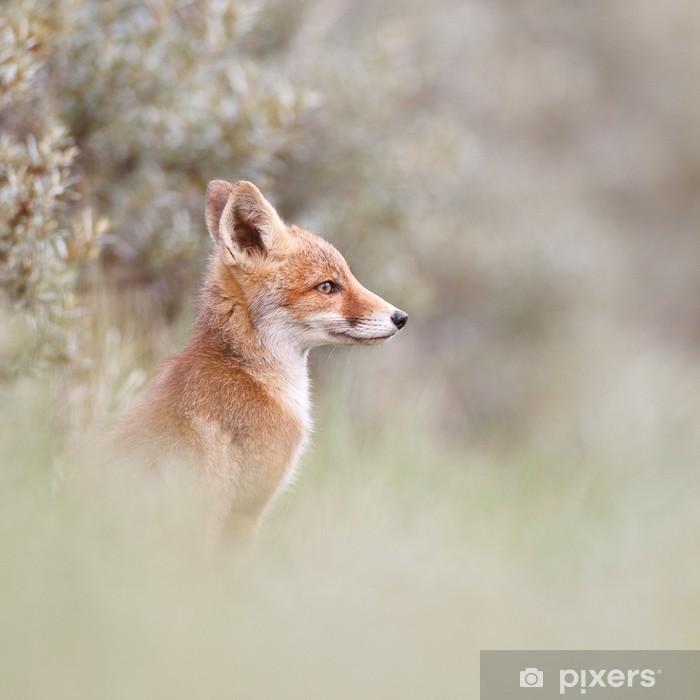 Vinyl Fotobehang Portret van een rode vos cub - Zoogdieren