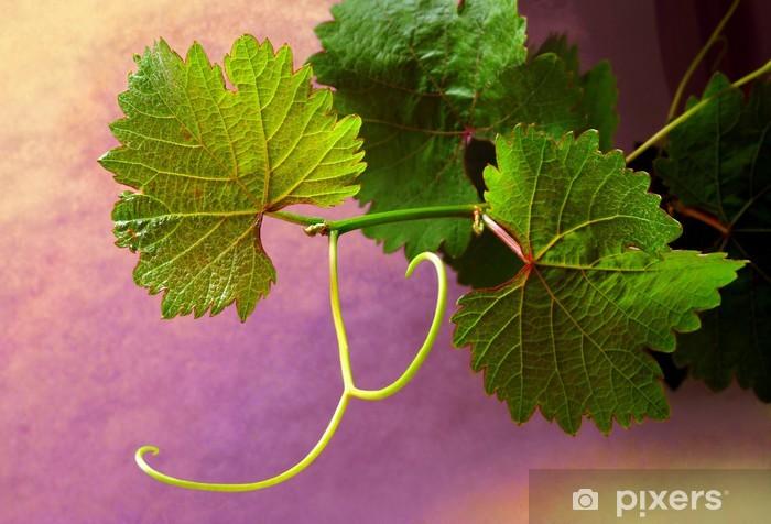 Vinyl-Fototapete Grapevine auf bunte Hintergründe - Pflanzen