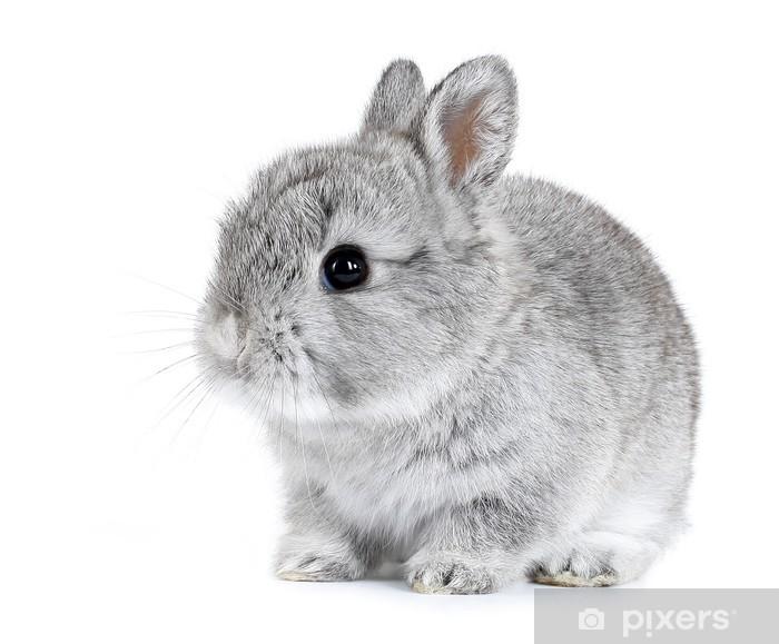 Papier peint vinyle Gris bébé lapin isolé sur fond blanc - Lapins