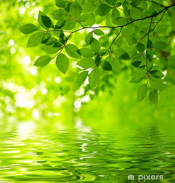 Papier peint vinyle Feuilles vertes -