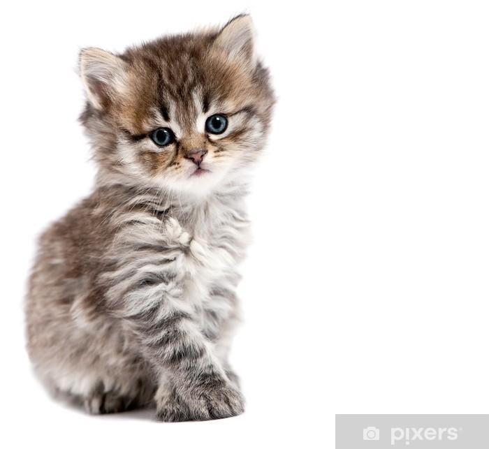 Carta Da Parati Il Piccolo Gatto è Isolato Su Uno Sfondo Bianco