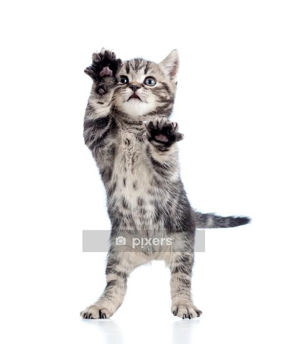 Muursticker Grappig staande speelse kitten geïsoleerd op witte achtergrond - Zoogdieren