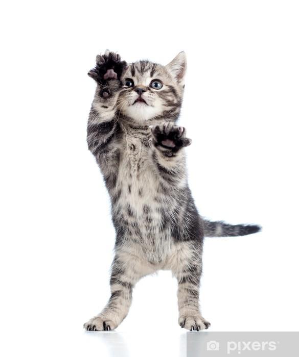 Vinilo para Nevera Divertido de pie gatito juguetón aislado en fondo blanco - Mamíferos
