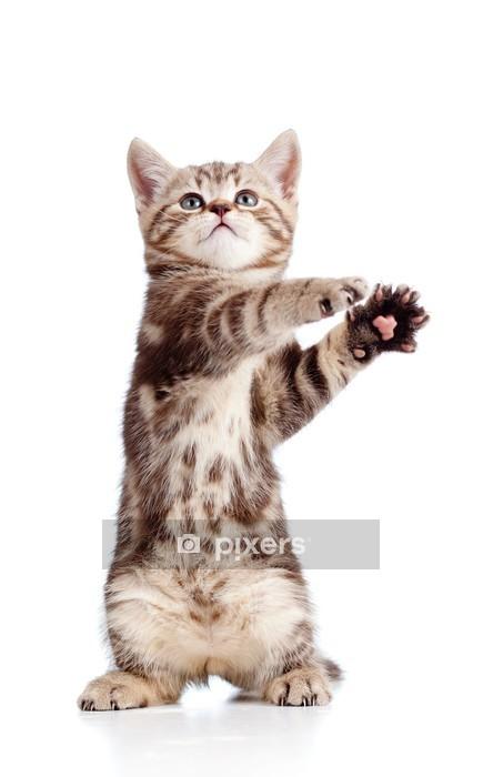 Muursticker Grappig staande speelse kitten geïsoleerd op witte achtergrond -