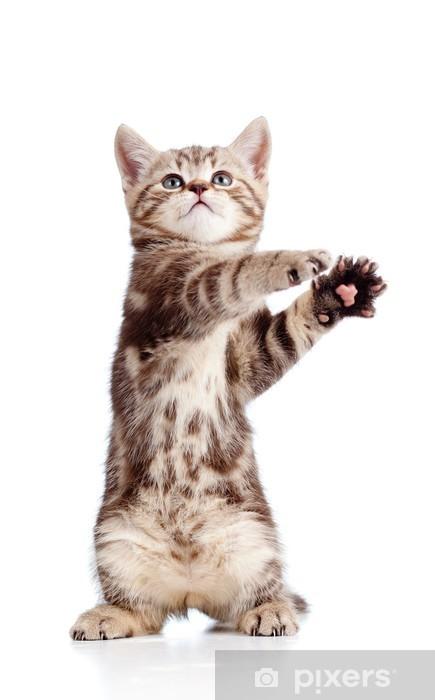 Vinilo para Nevera Divertido de pie gatito juguetón aislado en fondo blanco -