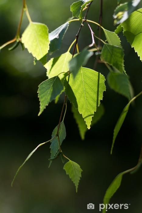 Sticker Pixerstick Bouleau feuilles vertes rétro-éclairé sur un fond défocalisé - Plantes