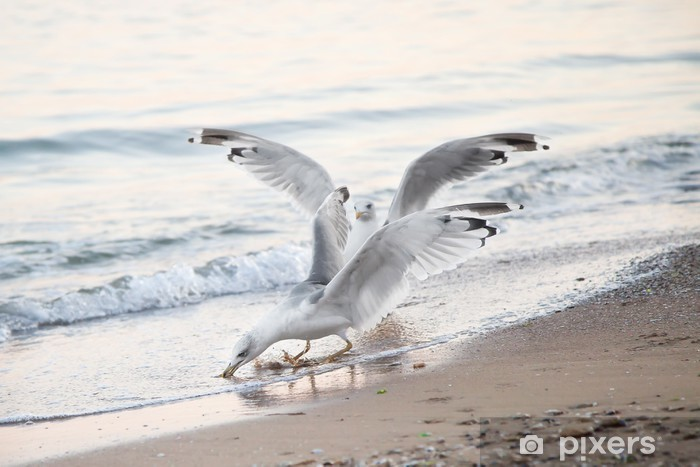 Seagulls on the background of the sea, with open wings Pixerstick Sticker - Birds