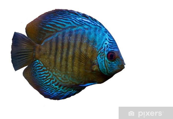 Fototapeta winylowa Niebieskie ryby na białym - Naklejki na ścianę