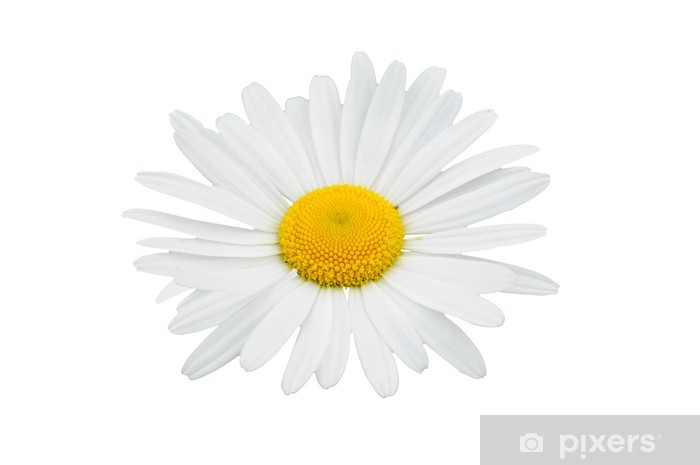 白い花 Pixerstick Sticker - Textures