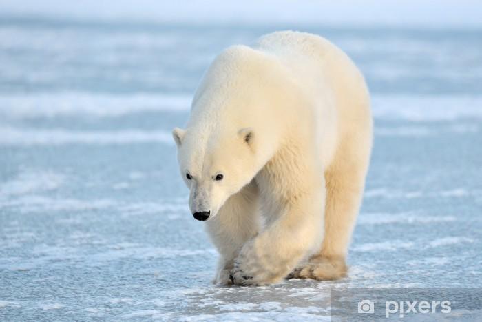 Polar Bear walking on blue ice. Pixerstick Sticker - Themes