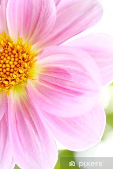 Naklejka Pixerstick Piękny różowy Dalia Dahlia - Pory roku