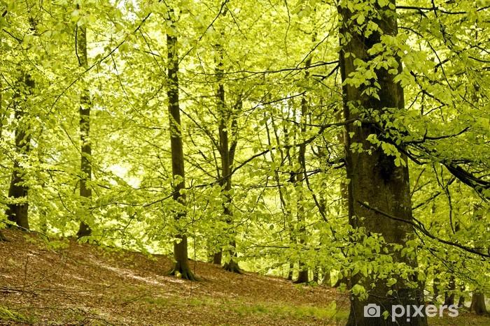 Papier peint vinyle Forêt au printemps, hêtre - Saisons