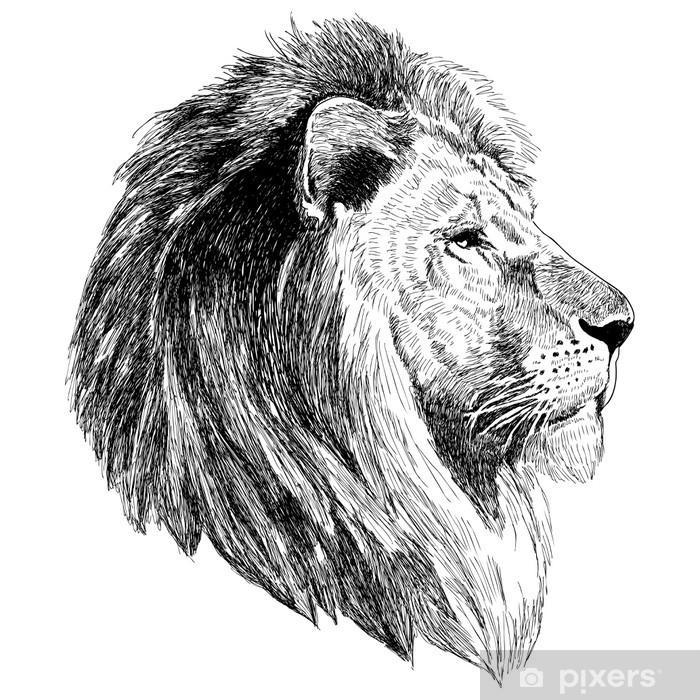 Bir Aslan Kafası Kroki çizim çıkartması Pixerstick Pixers Haydi