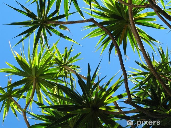 Vinylová fototapeta Dracaena et ciel bleu - Vinylová fototapeta