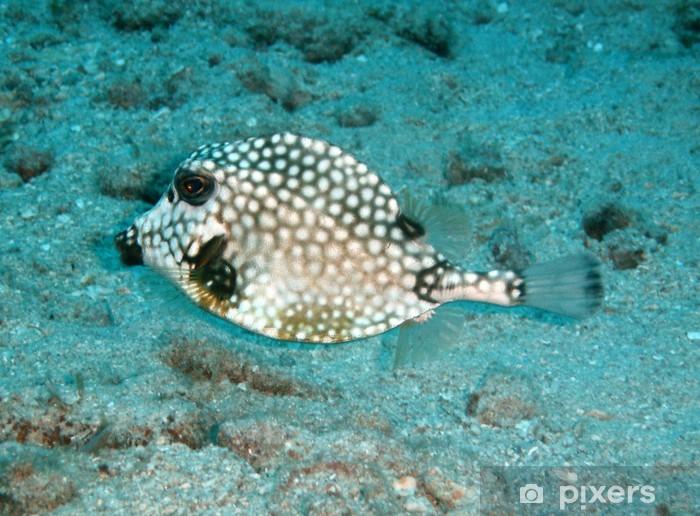 Naklejka Pixerstick Gładka kostera - Pod wodą