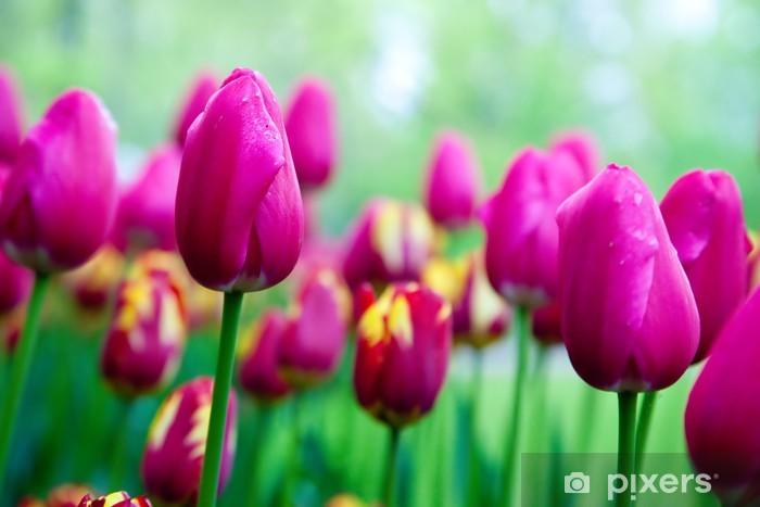 Naklejka Pixerstick Romantyczne różowe kwiaty tulipanów w ogrodzie wiosną - Tematy