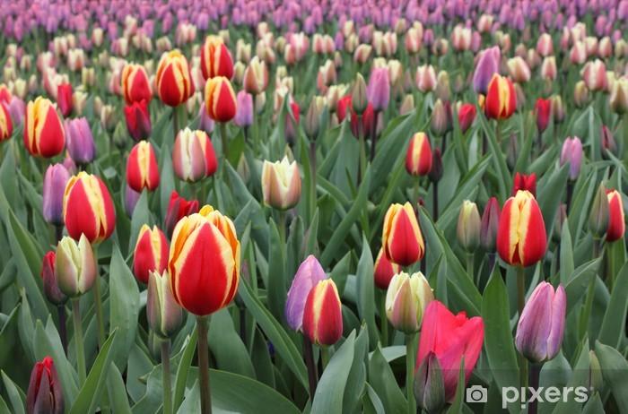 Vinyl-Fototapete Bunte Tulpen im Keukenhof-Gärten - Themen