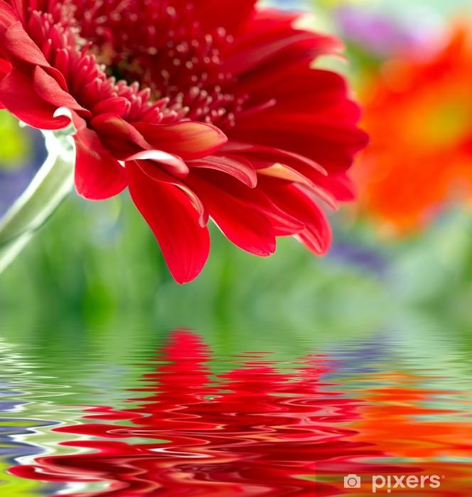 fototapete closeup of red daisy gerbera im wasser spiegeln pixers wir leben um zu ver ndern. Black Bedroom Furniture Sets. Home Design Ideas