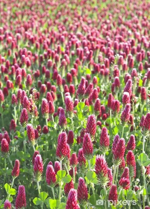 Fotomural Estándar Clover campo - Plantas