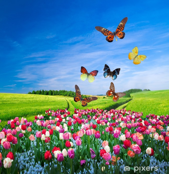 Field of colorful flowers and a butterfly group Pixerstick Sticker - Themes