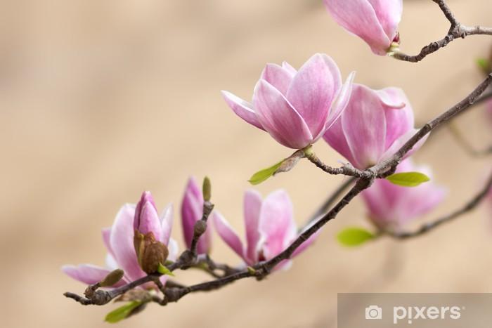 Naklejka Pixerstick Piękna magnolia - Tematy