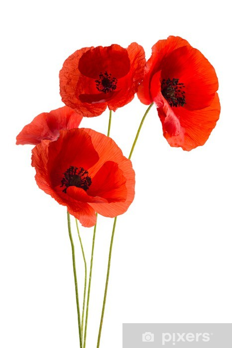 Coquelicots Vinyl Wall Mural - Themes