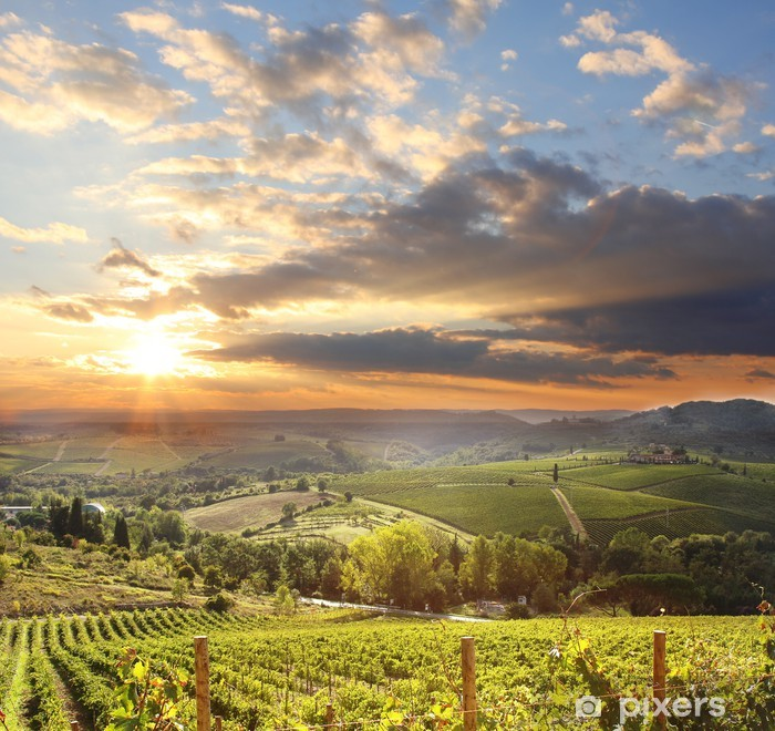 Chianti vineyard landscape in Tuscany, Italy Vinyl Wall Mural - iStaging