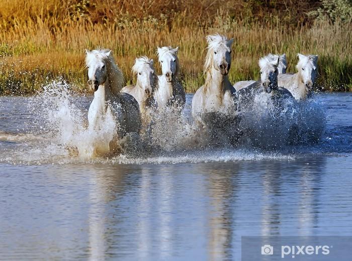 Horse Splash Vinyl Wall Mural - horses
