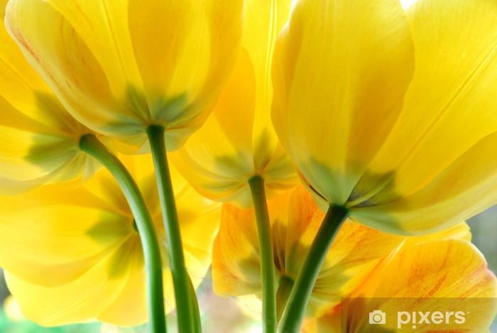 Naklejka Pixerstick Żółte kwiaty tulipanów - Tematy