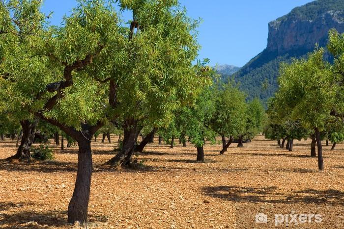Carta da Parati in Vinile Gli ulivi - Europa