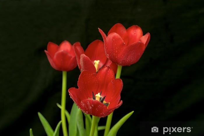 Fototapeta winylowa Czerwone tulipany - Kwiaty