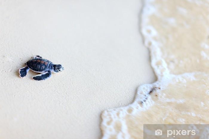 Papier peint vinyle Bébé tortue verte - Autres Autres