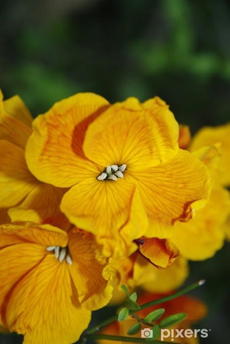 Fototapeta winylowa Wallflowers - Rośliny